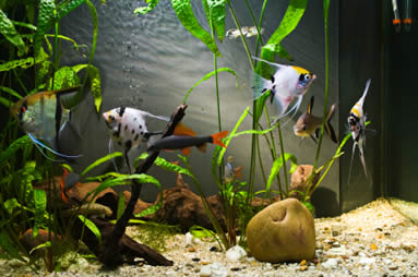 aquarium-lighting-plants