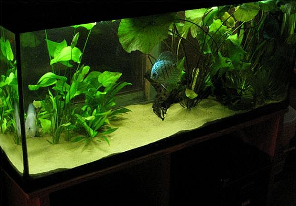 Planted-Fish-Tank01_Full